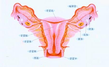 兴义女性得外阴白斑是什么症状